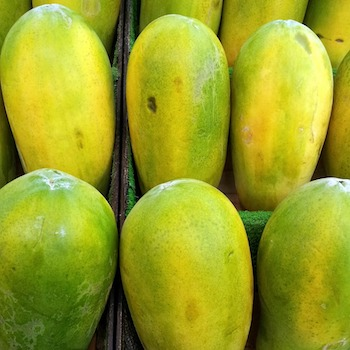 comprar-planton-papaya-espana