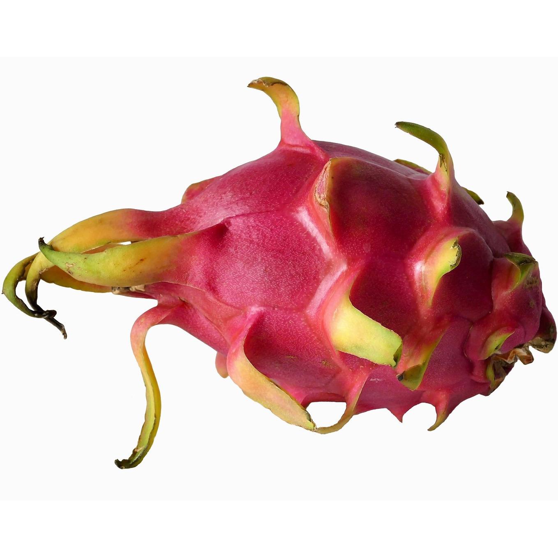 comprar-planton-pitahaya-fruta-dragon-espana