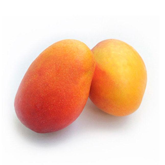 Comprar Mango Irwin España