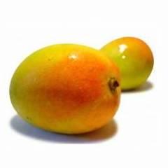 compra tu planta de mango Kensington España