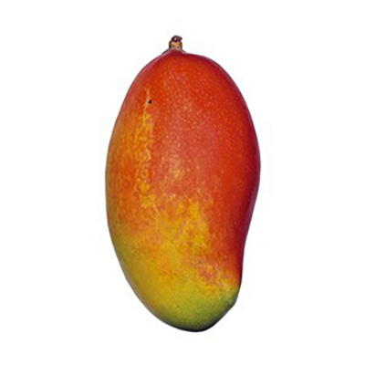 comprar mango palmer planton españa
