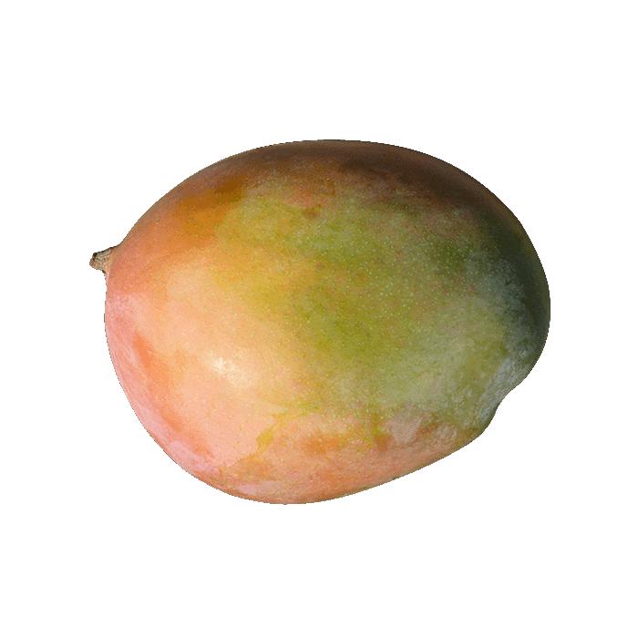 comprar-plantones-mango-irwin